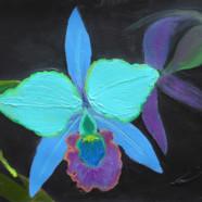 Aqua Orchid
