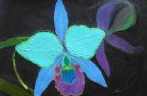 Cattleya Aqua Orchid